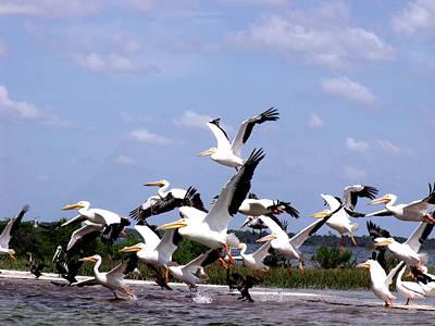 Snowbirds Heading South Poster