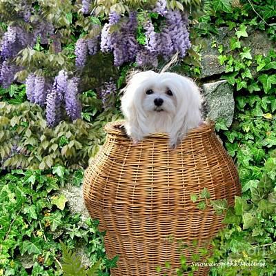 Snowdrop In A Basket Poster