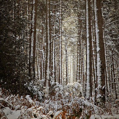 Poster featuring the photograph Snowed Forest by Antonio Jorge Nunes