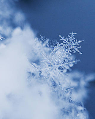 Snowflakes 2 Poster by Jeff Klingler