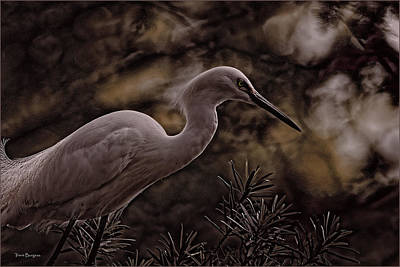 Poster featuring the photograph Snowy Egret 002 by Travis Burgess