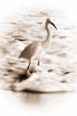 Snowy Egret Poster by Christina Ochsner