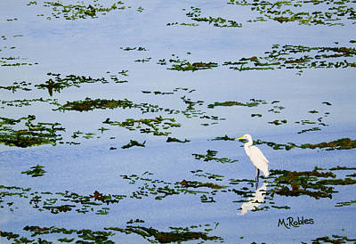 Snowy Egret Poster by Mike Robles