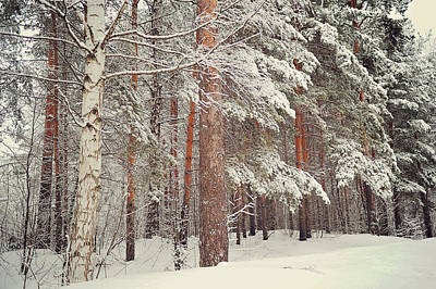Snowy Memory Of The Woods Poster by Jenny Rainbow