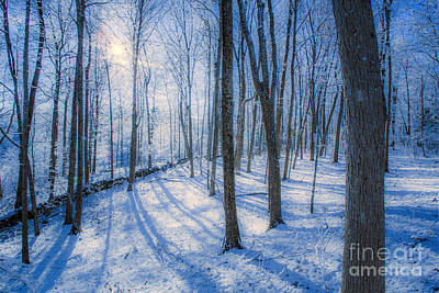 Snowy New England Forest Poster by Diane Diederich