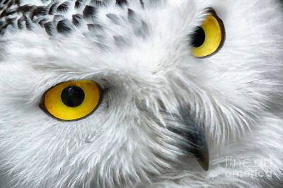 Snowy Owl Eyes Poster by Vincent Monozlay