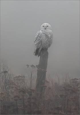 Snowy Owl  In The Mist Poster by Daniel Behm