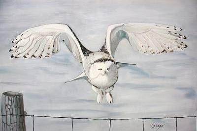 Snowy Owl Poster by Jean Yves Crispo