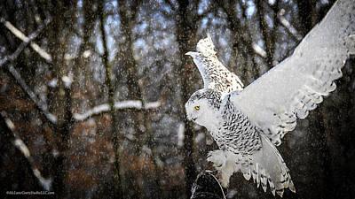 Snowy Owl Landing Poster