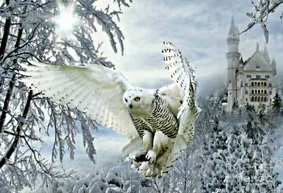 Poster featuring the mixed media Snowy Owl by Morag Bates