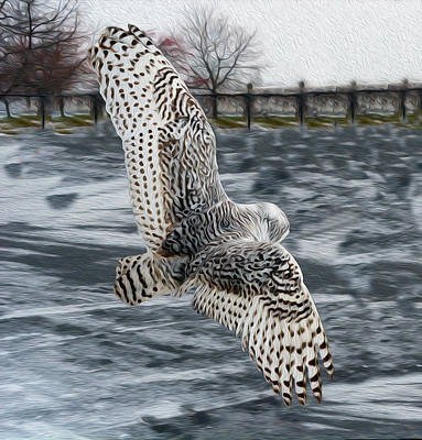 Snowy Owl Wingspan Poster