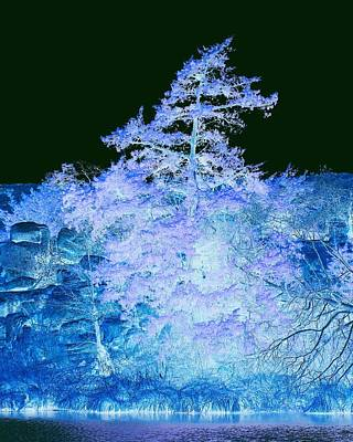 Snowy Tree Poster by Mickey Harkins