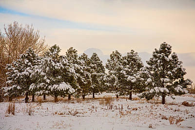 Snowy Winter Pine Trees Poster