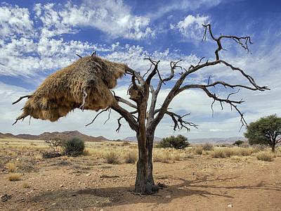 Sociable Weaver Nest Namib Desert Poster by Alexander Koenders