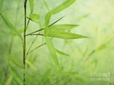 Soft Bamboo Poster by Priska Wettstein