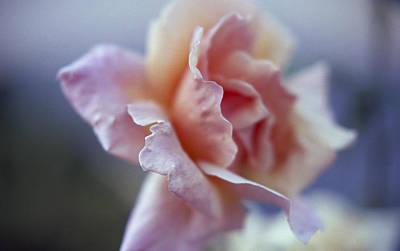 Soft Beauty Poster