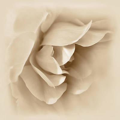 Soft Brown Rose Flower  Poster by Jennie Marie Schell