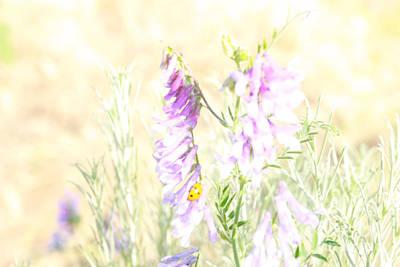 Soft Desert Flower Poster by Rich Collins