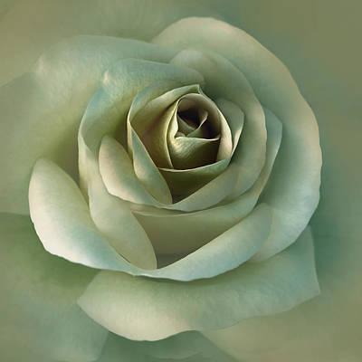 Soft Olive Green Rose Flower Poster