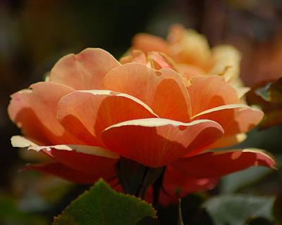 Poster featuring the photograph Soft Orange Flower by Matt Harang