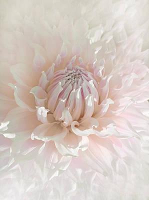 Soft Pink Dahlia Flower Poster