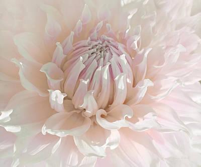 Soft Pink Dahlia Flower Macro Poster by Jennie Marie Schell