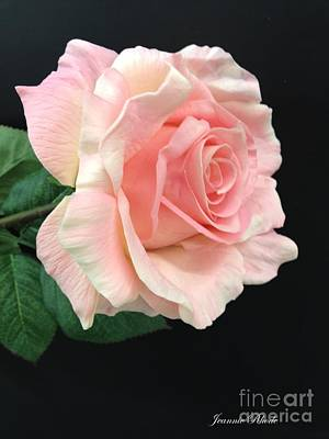 Poster featuring the photograph Soft Pink Rose 1 by Jeannie Rhode