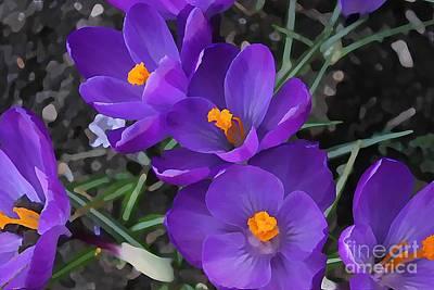 Soft Purple Crocus Poster