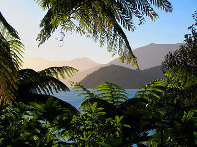 Soft Sun On Hills Through Ferns Poster