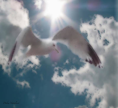 Soft Touch Seagull Fly  Poster by Debra     Vatalaro