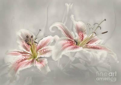 Soften Lilies Poster