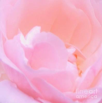 Softness Of A Rose Poster by Kathleen Struckle