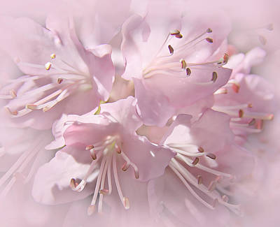 Softness Of Pink Pastel Azalea Flowers Poster by Jennie Marie Schell