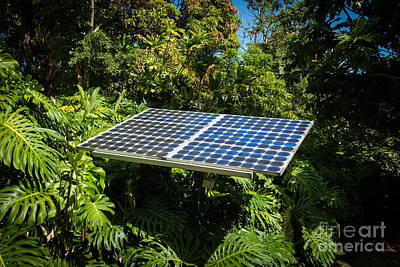Solar Panel In Jungle Poster