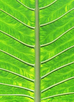 Solar Panel Leaf Veins Poster