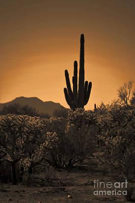 Solitary Saguaro Poster