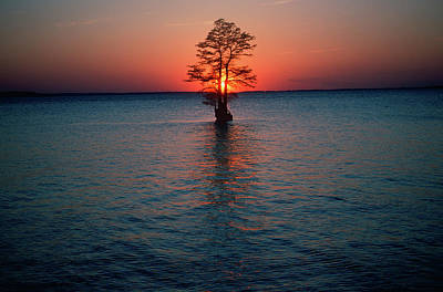 Solitary Tree In The James River Poster