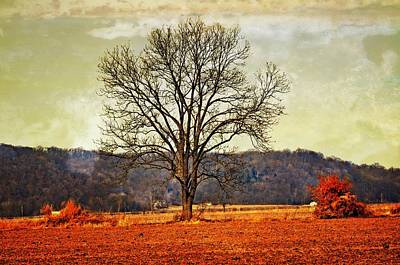 Solitary Tree Poster by Marty Koch