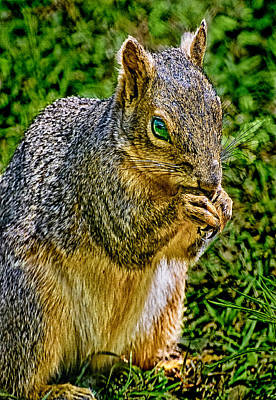 Some Squirrels Are Big Poster by Bob and Nadine Johnston