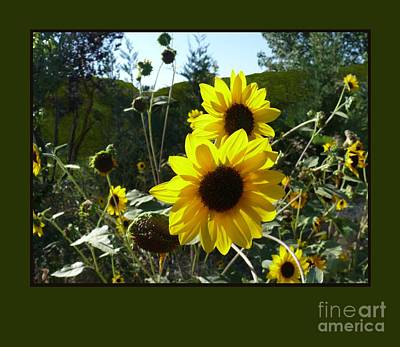 Song Of The Sunflower Poster by Jacquelyn Roberts