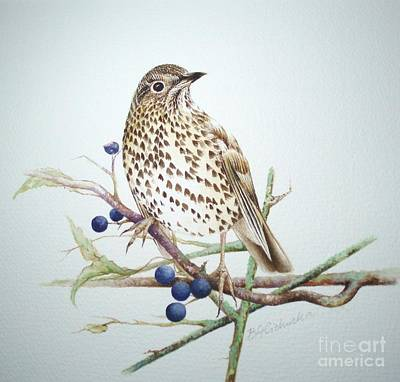 Song Thrush / Sold Poster