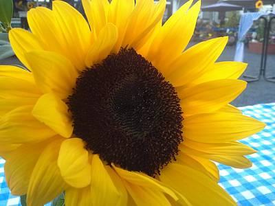 Sonnenblume Poster by Klaas Hartz
