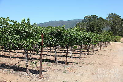 Sonoma Vineyards In The Sonoma California Wine Country 5d24492 Poster