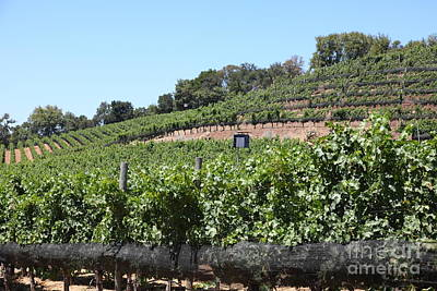 Sonoma Vineyards In The Sonoma California Wine Country 5d24503 Poster
