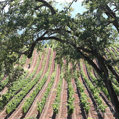 Sonoma Vineyards In The Sonoma California Wine Country 5d24619 Square Poster