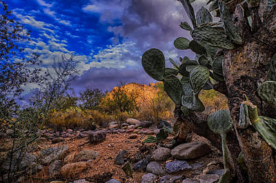 Poster featuring the photograph Sonoran Desert 54 by Mark Myhaver