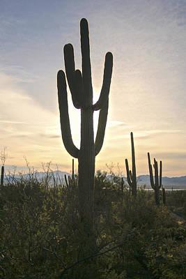 Sonoran Desert View Poster