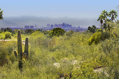 Sonoran Desert With Phoenix Skyline Poster
