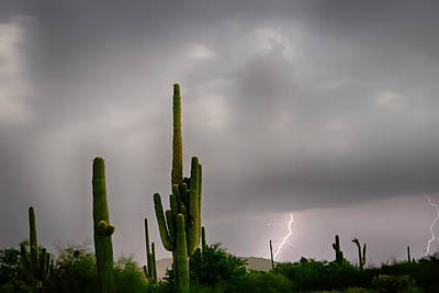 Sonoran Monsoon Lightning Thunderstorm Delight Poster