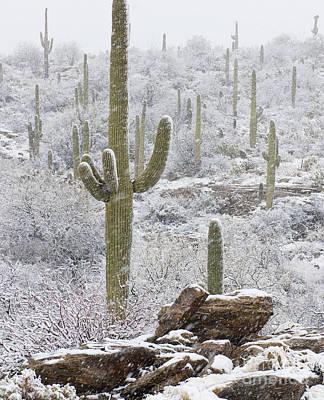 Sonoran Snowfall Poster by Timm Chapman